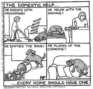 Domestic Help Puppy Style