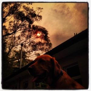 131021 Bushfires (2)