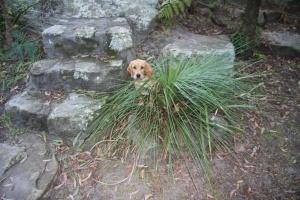 Little Pup in the backyard