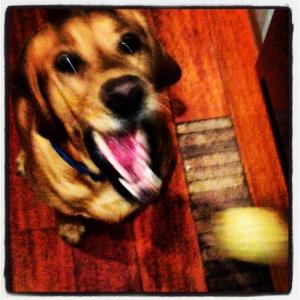 Puppy Mint Balls (2)
