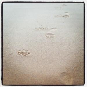 Paws on the Beach
