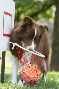 Wonder_basketball03