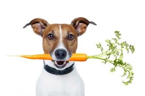dog-carrot473w
